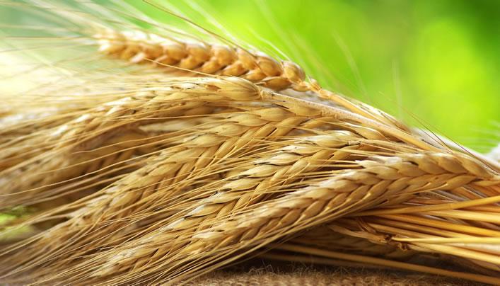 Genç Çiftçilerin Desteklenmesi Tebliği Başbakanlıkta