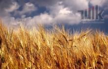 2018 Devlet Destekli Tarım Sigortaları