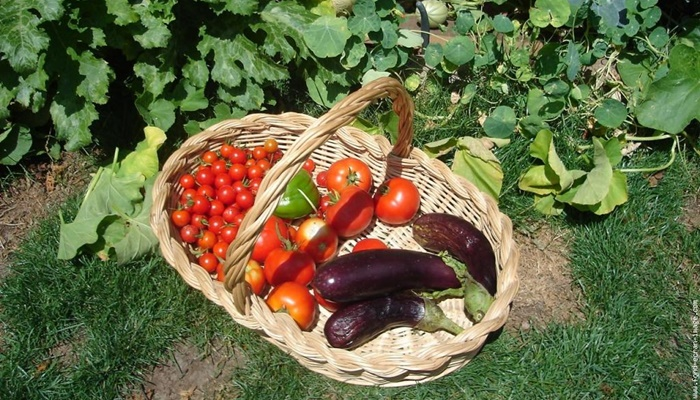 Organik Tarım Desteği Başvuru Süresi