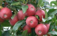 2017-2018 Bitkisel Ürün Denge Tabloları - Meyveler, Sert Kabuklular ve İçecek Bitkileri