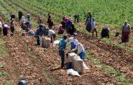 Kasım 2020 Tarımsal Girdi Fiyat Endeksi