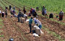 Tarımda İstihdam 310 Bin Kişi Arttı