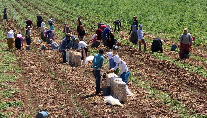 2017 Tarımsal İşletme İşgücü Ücret Yapısı