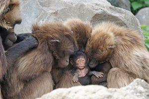 vahsi-yasam-maymun-yavrusu