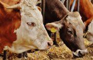 2016 Yılı Canlı Hayvan ve Hayvansal Ürün Fiyatları