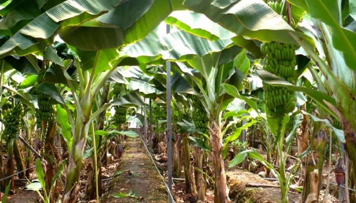Tarımsal Üretimde Seracılık Artıyor