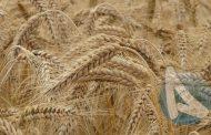 2017-2018 Bitkisel Ürün Denge Tabloları - Tahıllar ve Diğer Bitkisel Ürünler