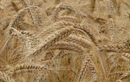 2020 Bitkisel Ürün Fiyatları ve Üretim Değeri